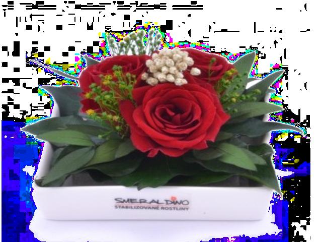 Stabilizovaná růže Zina