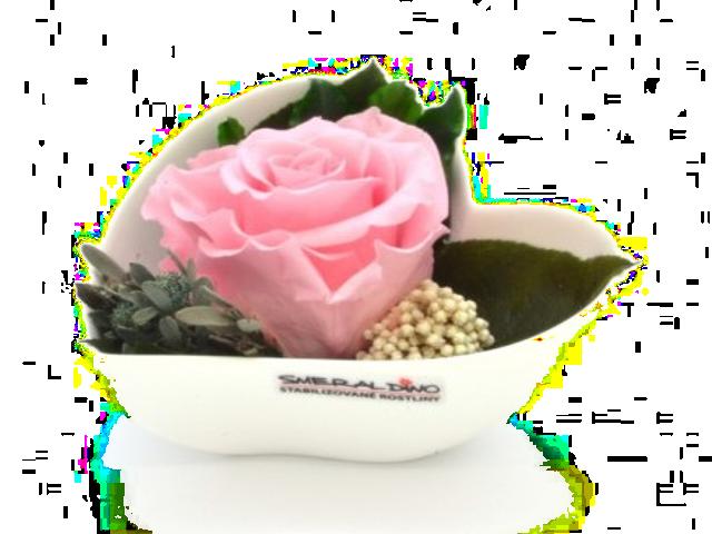 Stabilizovaná růže Lena
